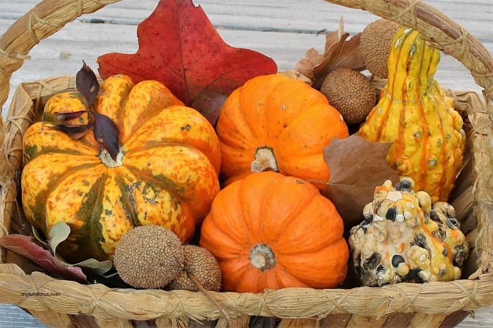 decorating for Fall on a budge