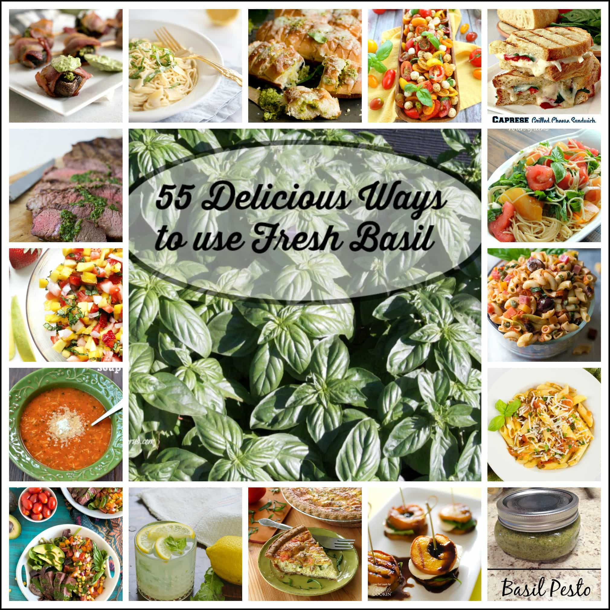 over 55 different sweet basil recipes that use fresh basil