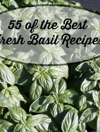 55 of the Best Fresh Basil Recipes