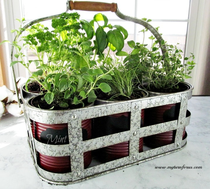 Herb Kits For Indoors: Easy And Inexpensive DiY Indoor Herb Garden Kit