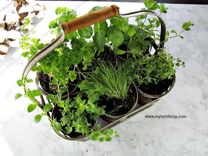 Easy and Inexpensive DiY Indoor Herb Garden Kit - My Turn for Us