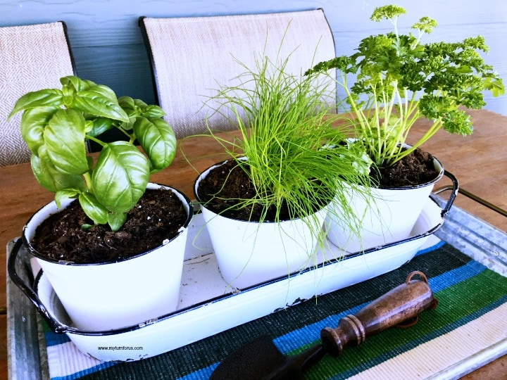 Herb gardening for beginners, Growing an indoor Herb Garden