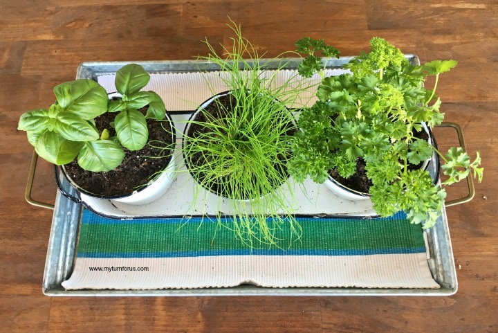 Best indoor herb garden