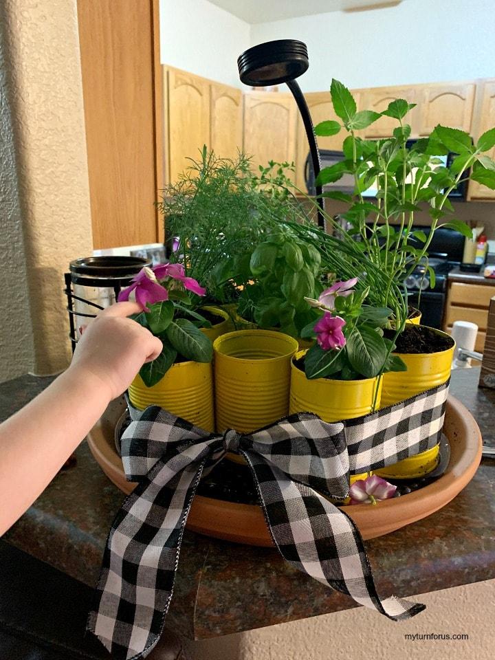 DIY best indoor garden kit